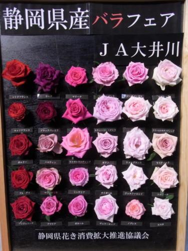 静岡バラフェア 10.10.25〜29 (太田市場)